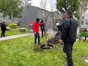 Group of men planting small tree
