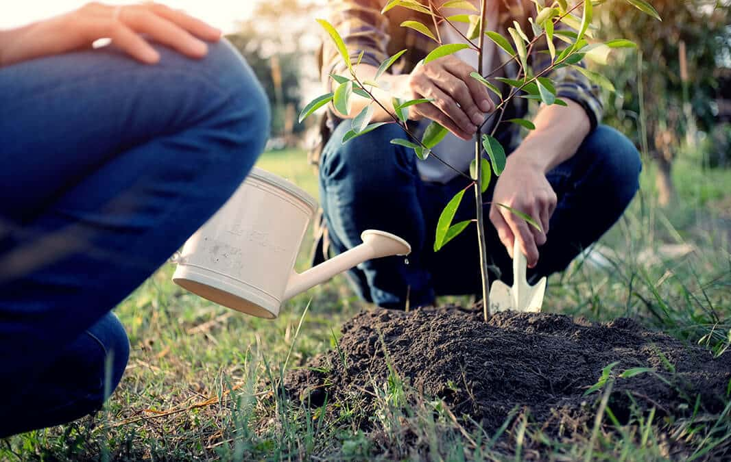 Two cropped people planting small tree